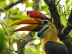 North Sulawesi – Birds