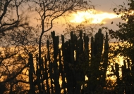 Sunset on the cactus