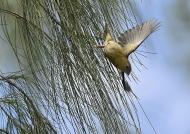 Female leaving the nest