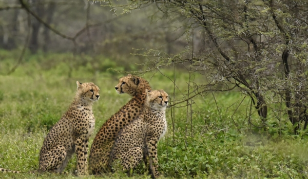 Mum with two cubs