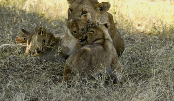with my Lion cub brothers