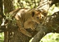 Sad, I shelter in my tree