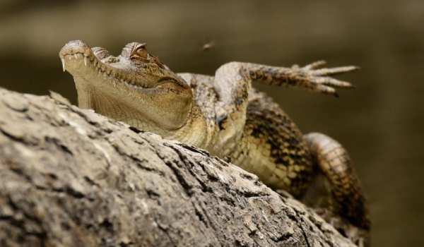 critically endangered…