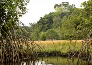 Around Loango lodge