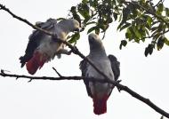Talking on a branch