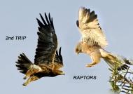 2nd trip – Raptors