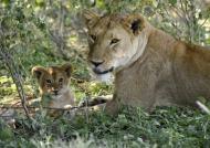 Mom educating the cub
