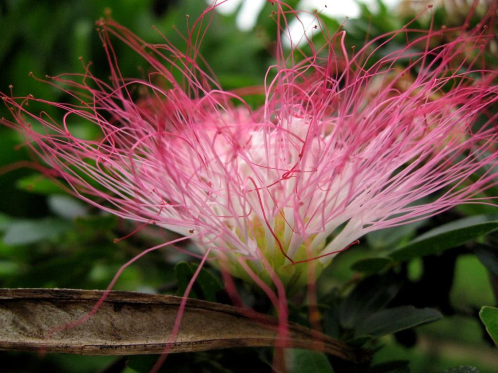 plants flowers