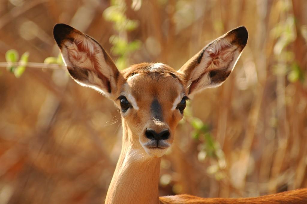 Tanzania Mammals Part 2