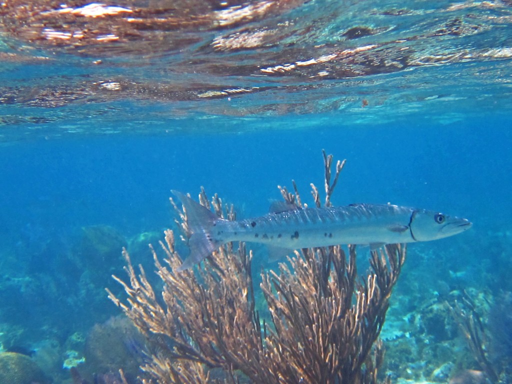 Belize - Underwater