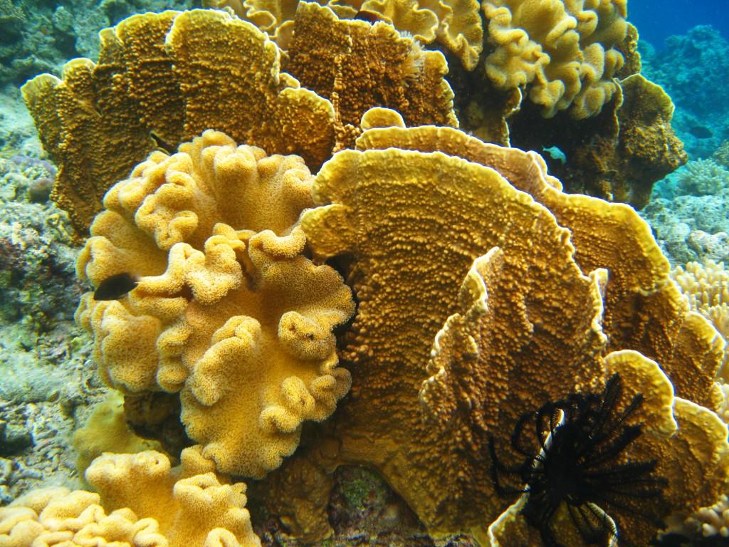 ... corals soft hard corals expansive hard coral plates soft hard corals