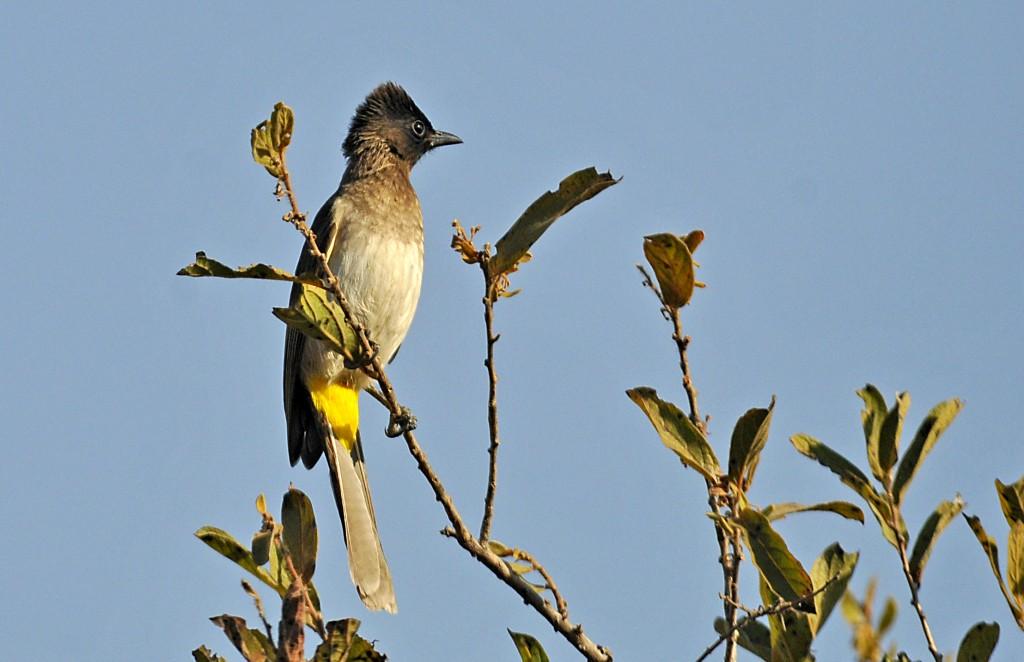 Tanzania Birds Part 5