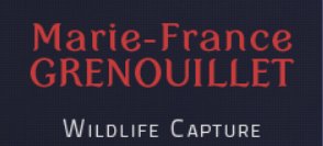 Marie-France Grenouillet – Wildlife Photographer