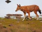 Ethiopia – Mammals