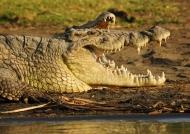 Ethiopia – Reptiles