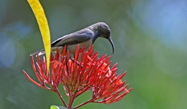 Seychelles – Birds
