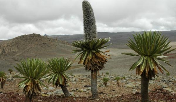 Ethiopia – Landscape