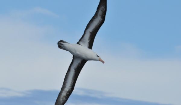 Antarctica – Other Birds