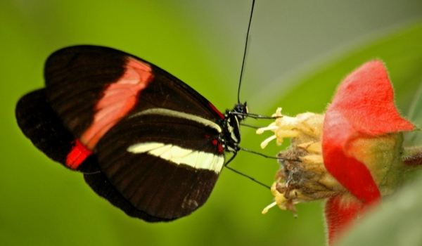 Costa Rica – Insects