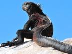 Galapagos – Reptiles