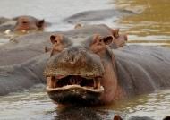 Zambia – Mammals