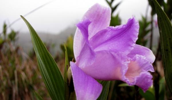 Nicaragua – Plants & Flowers