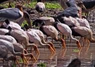 Zambia – Birds