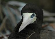 Panama – Birds
