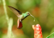Costa Rica – Birds