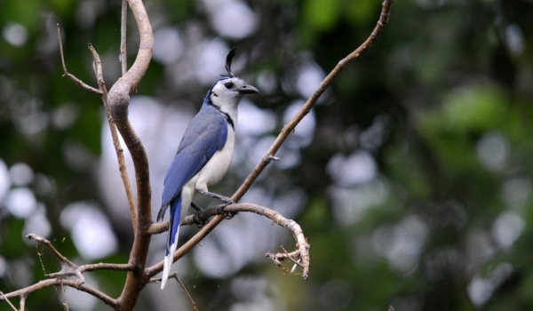 Nicaragua – Birds