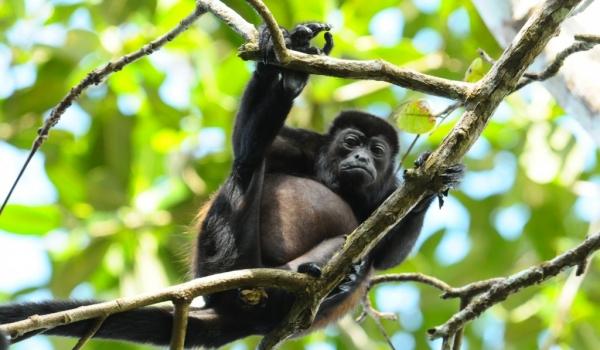 Nicaragua – Mammals