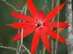 Panama – Plants & Flowers