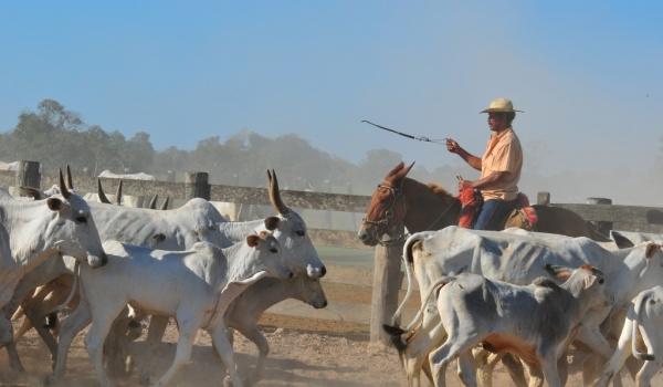Cowboy at work
