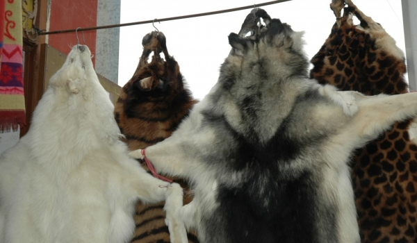 China Sale of furs in Songpan