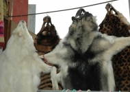 China Sale of furs in Songpan