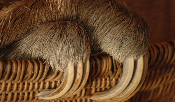 Sloth fingers