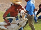 Pantanal – Cattle Marking