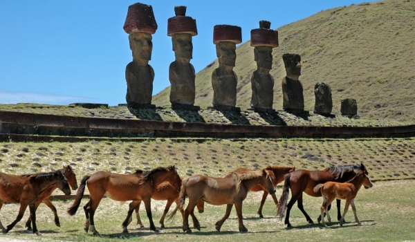 Moai at Anakena beach