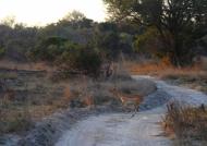 Zambia – Antelope busanga Plains