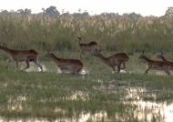Botswana – Landscape