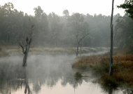Dawn in Bandhavgarh NP