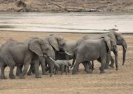 Zambia – Elephant Family
