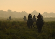 Early elephant ride – Kaziranga