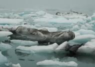 Jokulsarlon Iceberg lake
