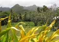 Inside of Rarotonga Island