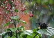 Seychelles Sunbird