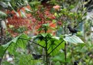 Sunbirds – Natural  shower
