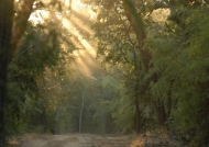 Sunlight effects in Kanha N.P.