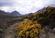 Scotland Typical scottish wilderness