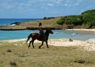Wild ride on the beach